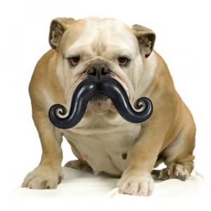 moustache chien