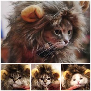 crinière de lion pour chat