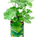 canette-trefle-4-feuilles