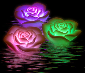 rose-bain-lumiere-couleur