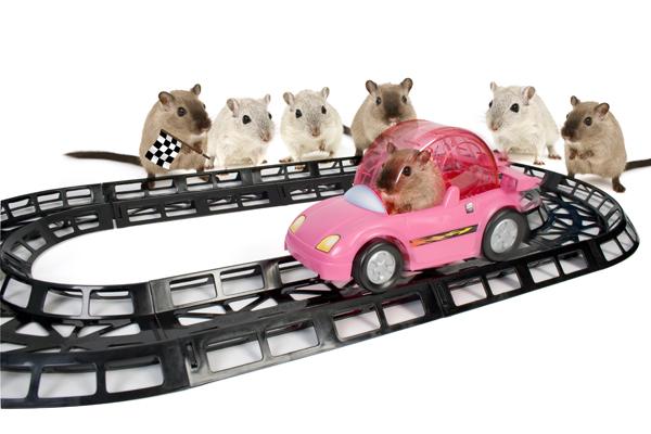 circuit de voiture pour hamster une voiture conduite par un hamster sur un circuit gr ce sa. Black Bedroom Furniture Sets. Home Design Ideas