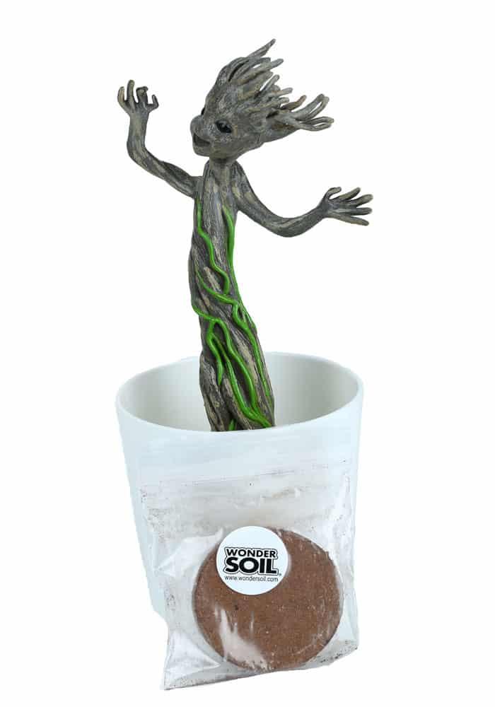Plante groot lumineuse super insolite for Achat plante