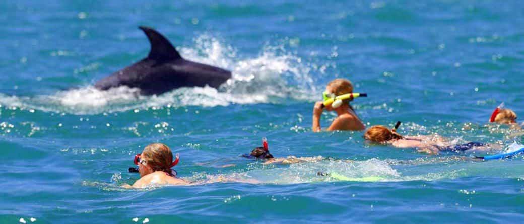 nager avec les dauphins à Cannes