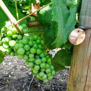 cadeau vigne et vin