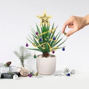kit deco noel plante