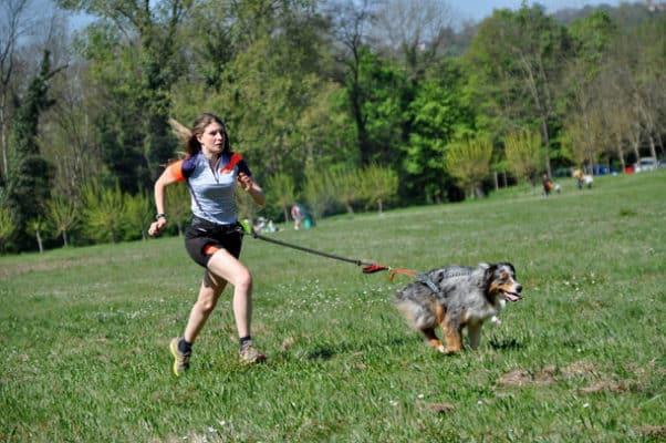 laisse pour courir avec son chien