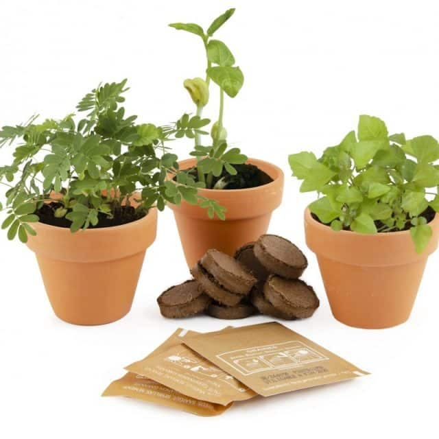 trio plantes magiques insolites