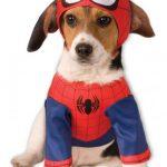 deguisement-de-spiderman-pour-chien