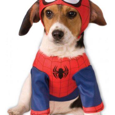 déguisement chien spiderman