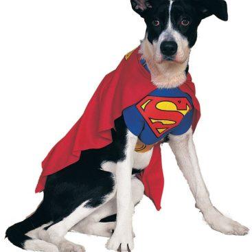 déguisement chien superman