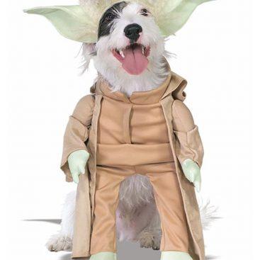 costume yoda chien