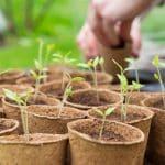coffret-jardiner-lune (2)
