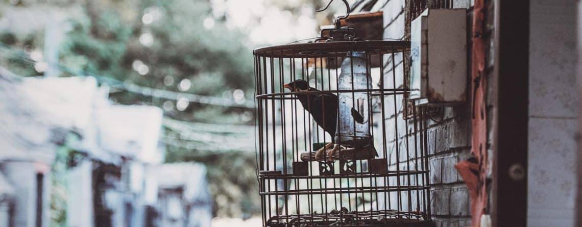 mangeoir oiseaux